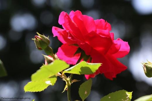 Flower 082